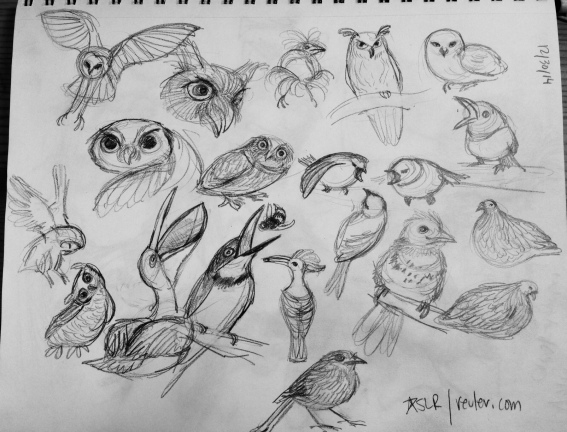 owls and other birds
