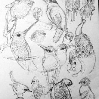 more birds