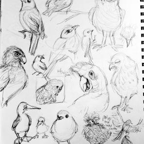 lots of birds