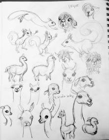 llamas, alpacas & squirrels, oh my...