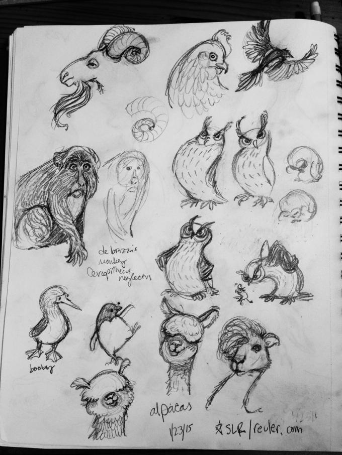 owls, alpacas and friends