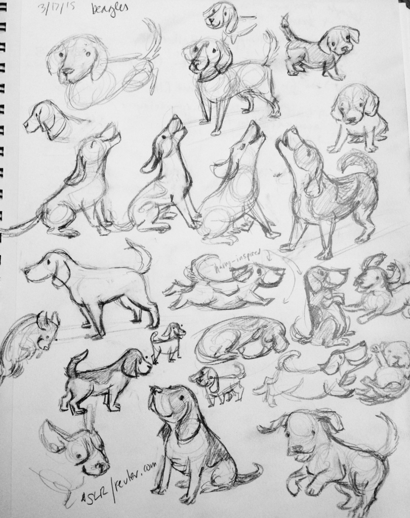 beagle sketch