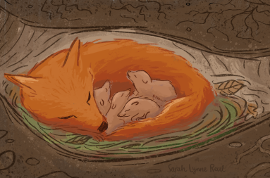 SarahLynneReul_NEForest_fox_slr